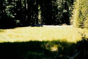 meadowtrl1